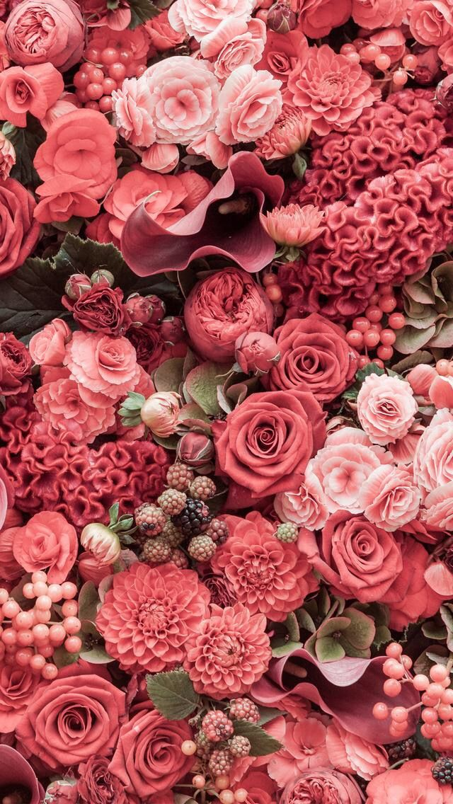 Wallpaper iPhone/pink roses/beautiful ⚪