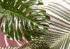 west-elm-tropical-leaves-wallpaper.jpg (1242×2208)