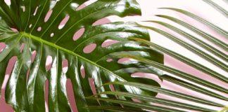 Iphone Wallpaper : west-elm-tropical-leaves-wallpaper.jpg (1242×2208)