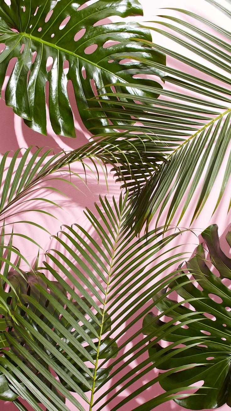 Iphone Wallpaper West Elm Tropical Leaves 1242