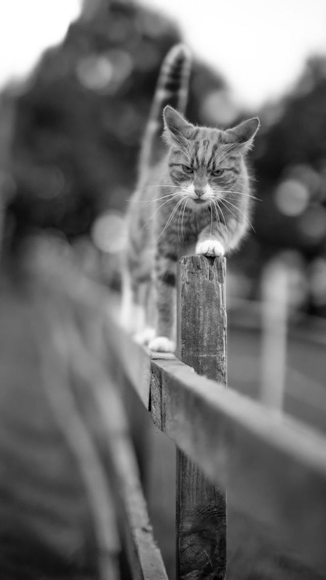 Animals wallpaper iPhone cats