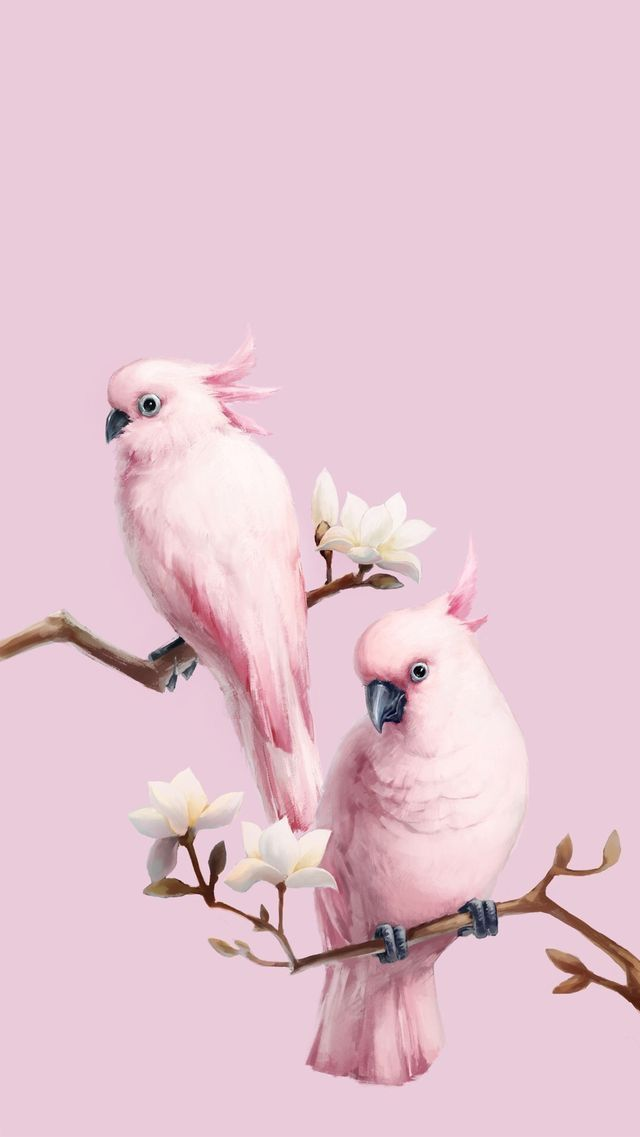 Animals wallpaper iPhone