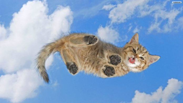 Cat on Your Desktop Wallpaper