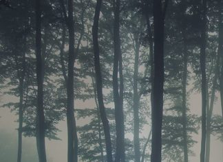 Discover calming interior design with a moody forest wallpaper. Featuring a sea ...