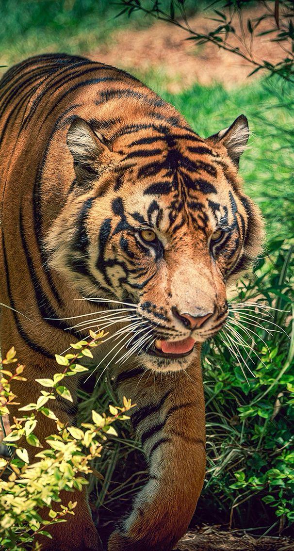 Animals Wallpapers Iphone Animals Wallpaper Iphone Wallpaperart