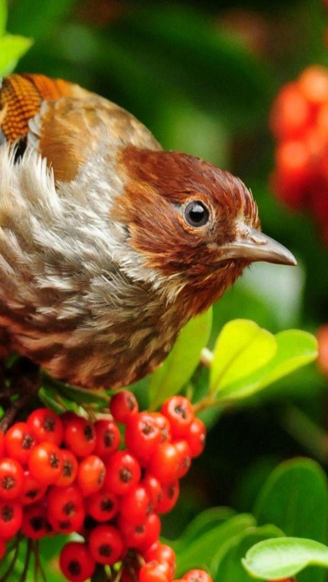 Animals wallpaper iPhone birds
