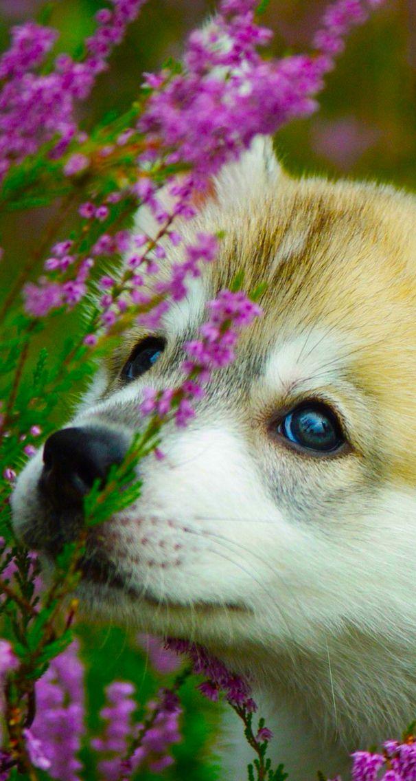 Animals wallpaper iPhone dog