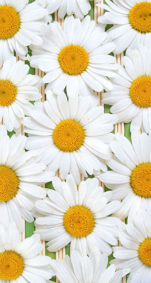 Nature Iphone Wallpaper Ideas Nature Wallpaper Iphone Flowers
