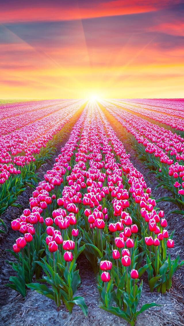 Nature Iphone Wallpaper Ideas IPhone Flowers