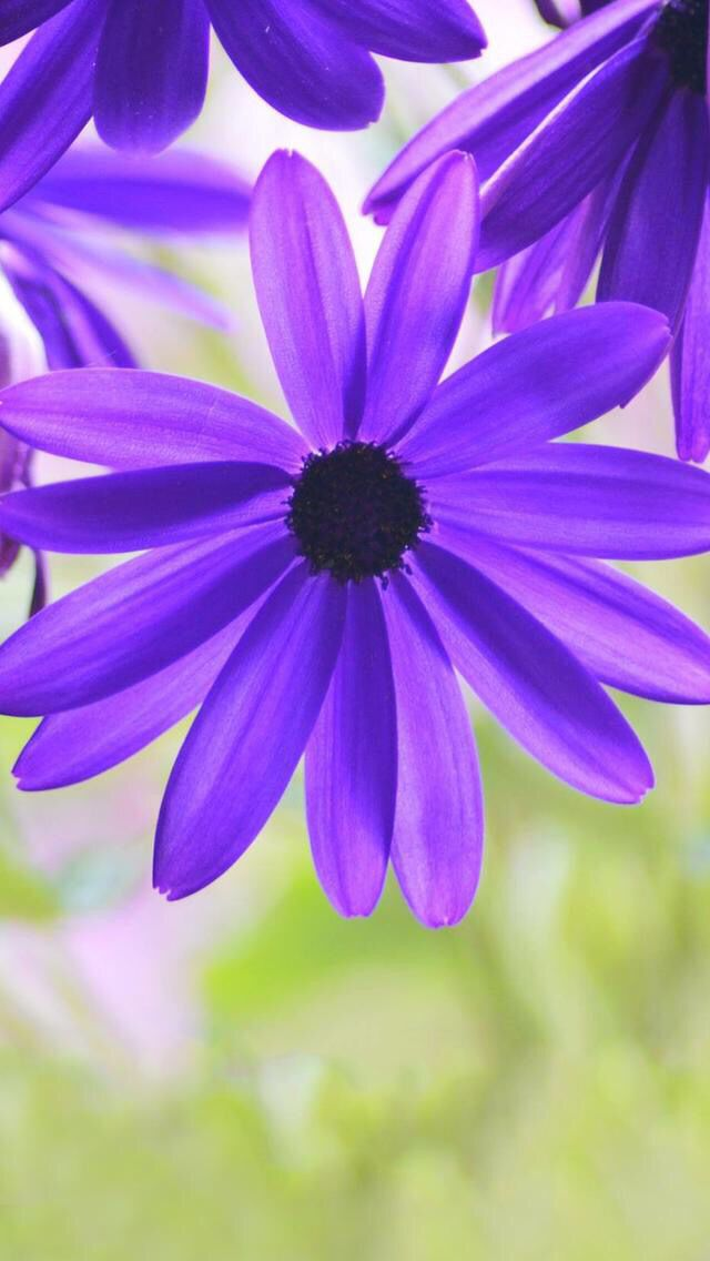 Nature Iphone Wallpaper Ideas Nature Wallpaper Iphone Purple