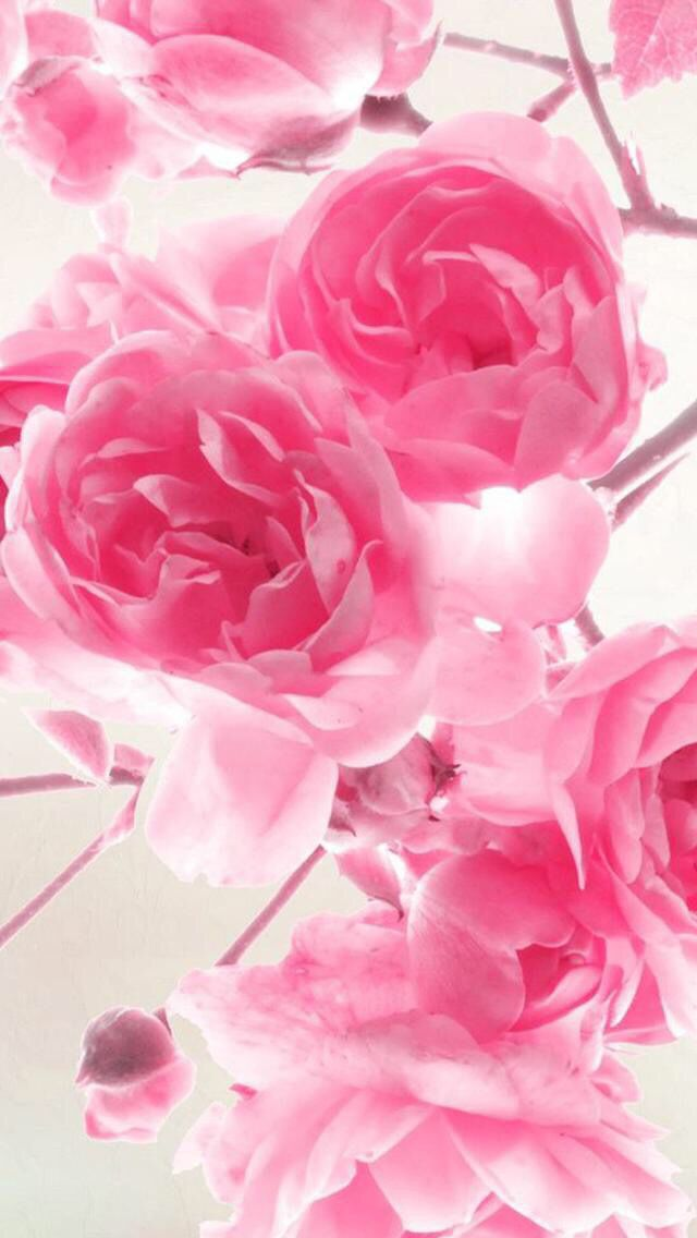 Nature iphone wallpaper ideas nature wallpaper iphone flowers pink nature wallpaper iphone flowers pink free download full hd mightylinksfo