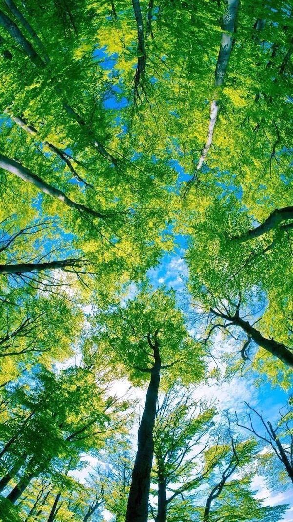 Nature Iphone Wallpaper Ideas Nature Wallpaper Iphone Green