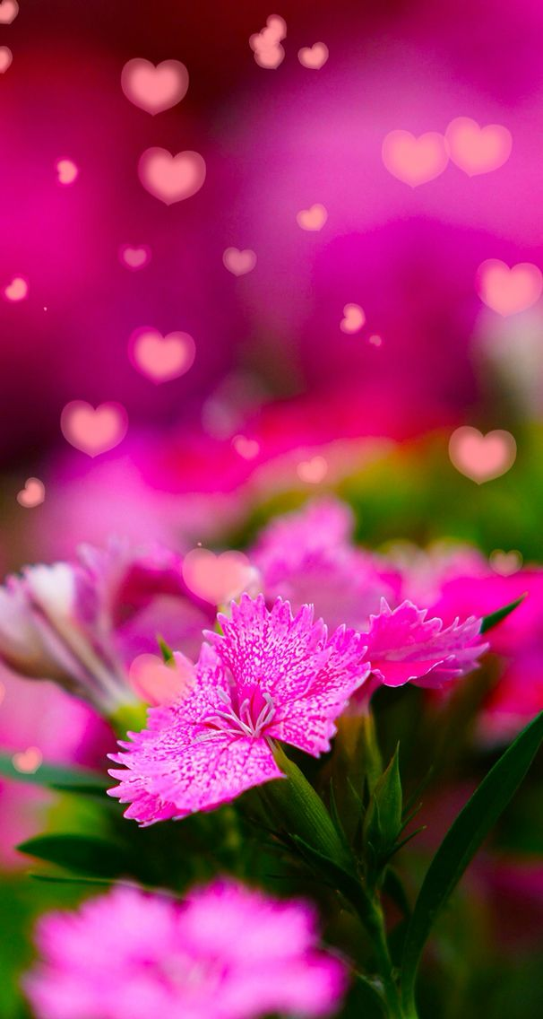 Nature wallpaper iPhone flowers pink