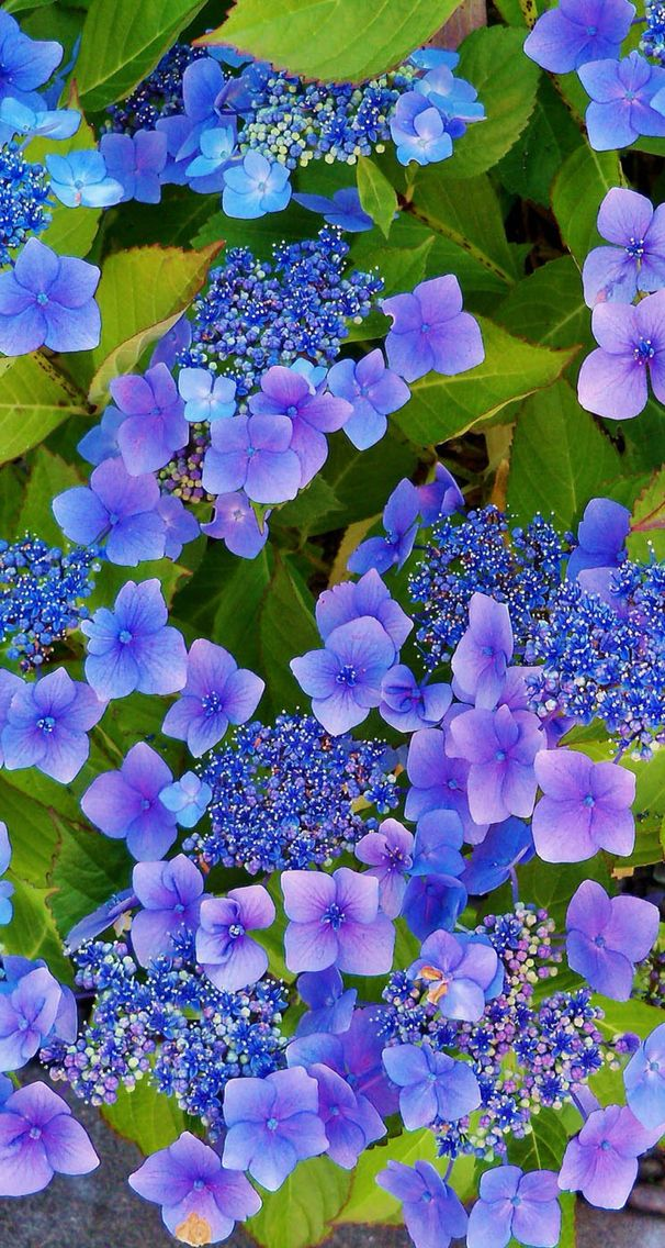 Nature wallpaper iPhone flower