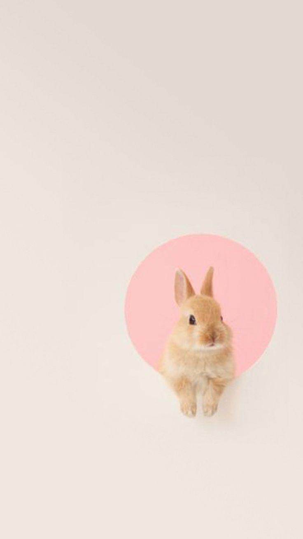 Animals Wallpapers Iphone Rabbit Minimalist Wallpaperart Net
