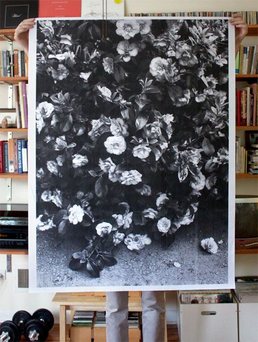 flowers + paper + black and white