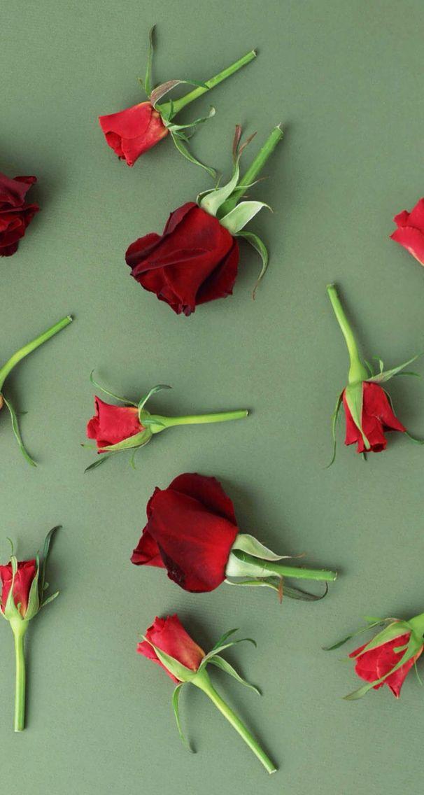 Nature wallpaper iPhone flower roses