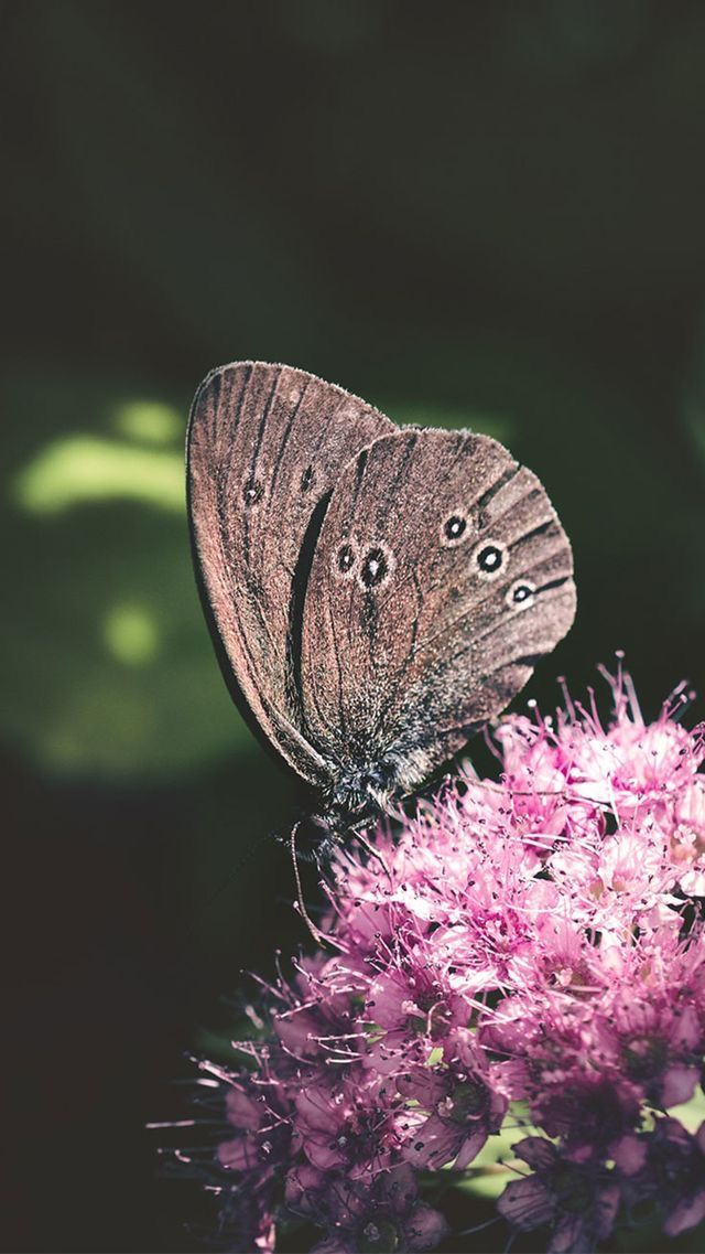 Nature wallpaper iPhone flowers butterfly