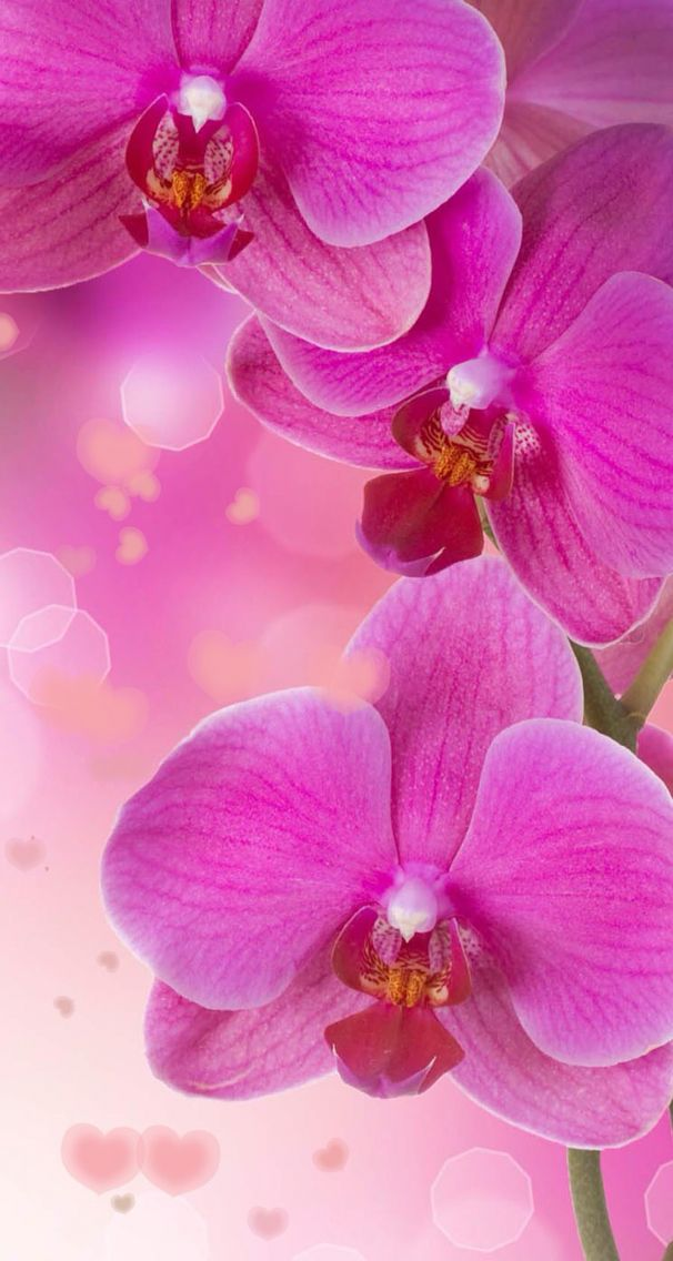 Nature wallpaper iPhone pink flowers