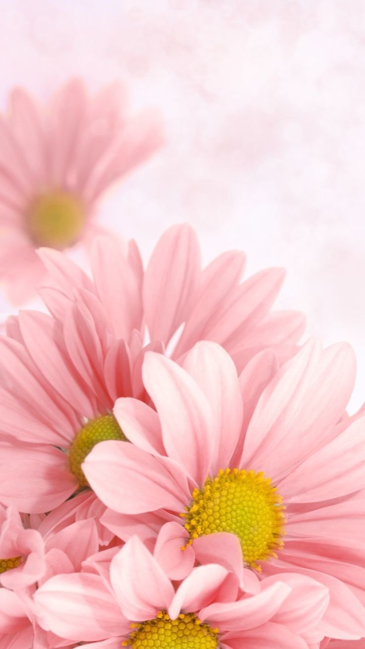 Phone Celular Wallpaper Flower