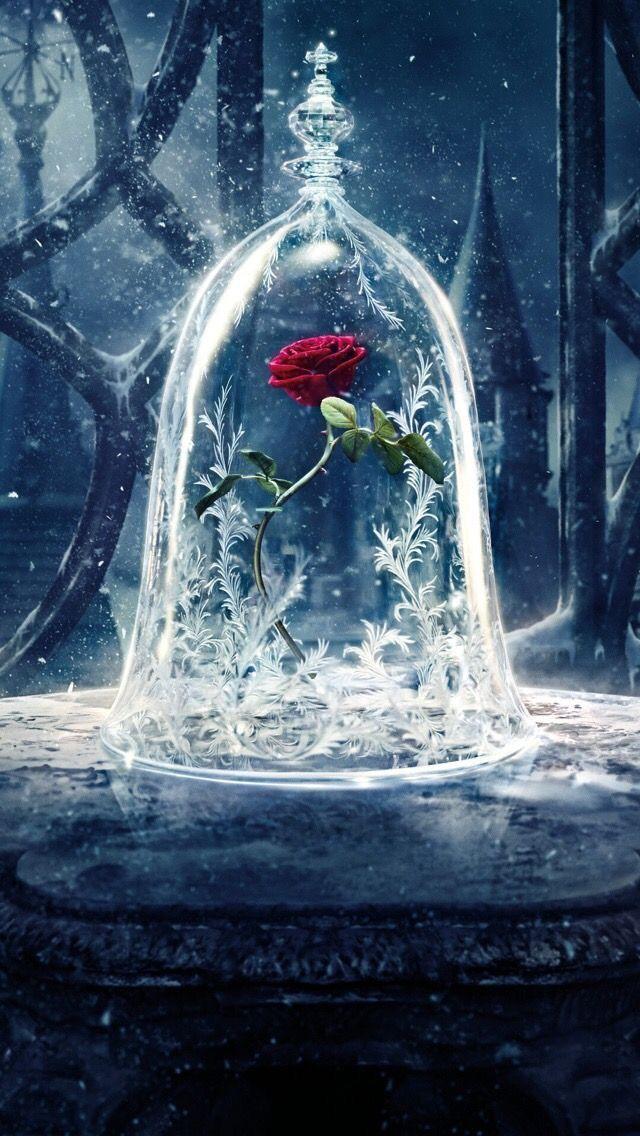Wallpaper iPhone flowers rose