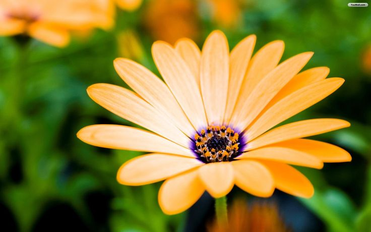 Desktop wallpaper pretty flowers imagefree imagesflowers pretty flowers imagefree imagesflowers wallpapersflowers mightylinksfo