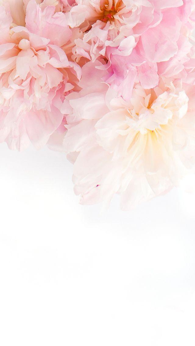 nice Flower flowers iphone wallpaper Tumblr-25