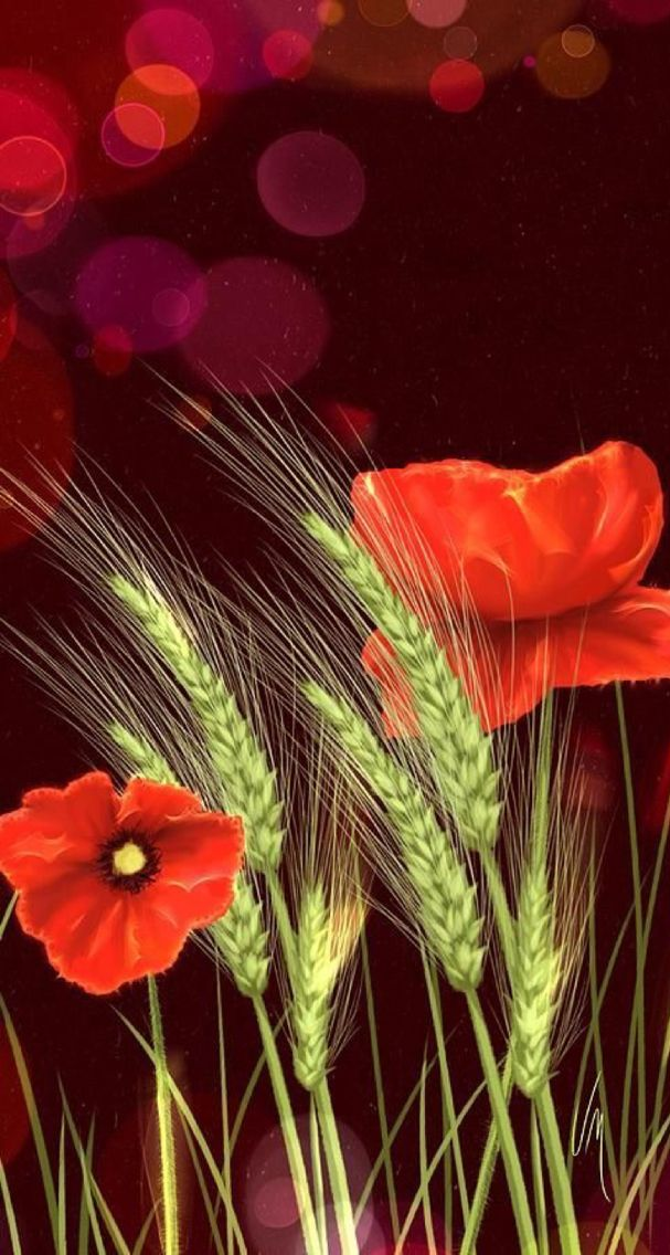 Wallpapers flowers iPhone