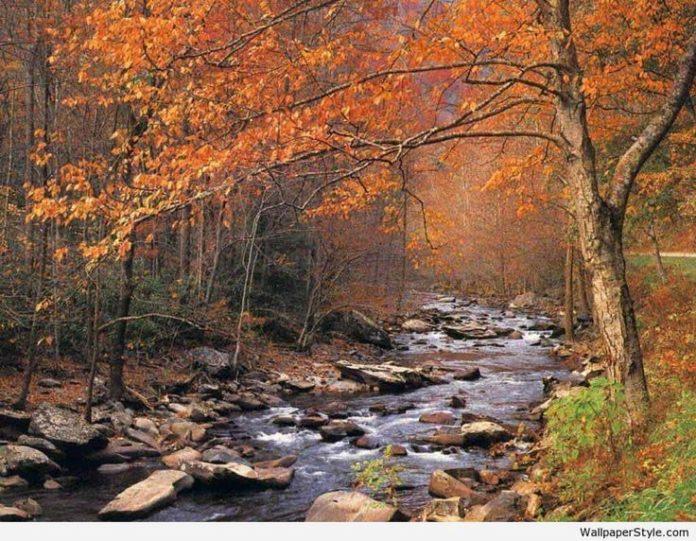 autumn desktop backgrounds free - desktopwallpaper.... #Autumn, #Backgrounds, #D...