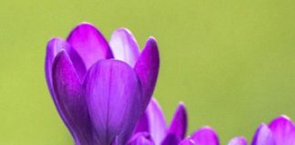 Wallpapers#nature#flowers#iphone