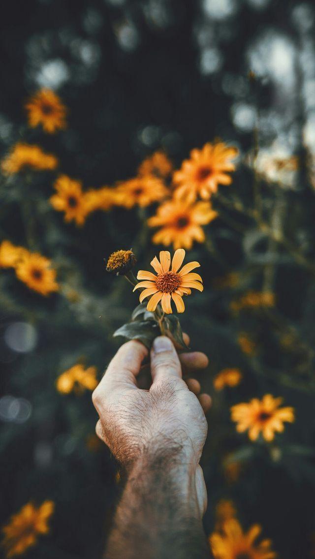 Nature wallpaper iPhone
