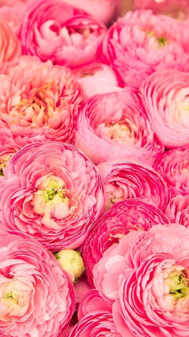 Nature wallpaper iPhone flowers