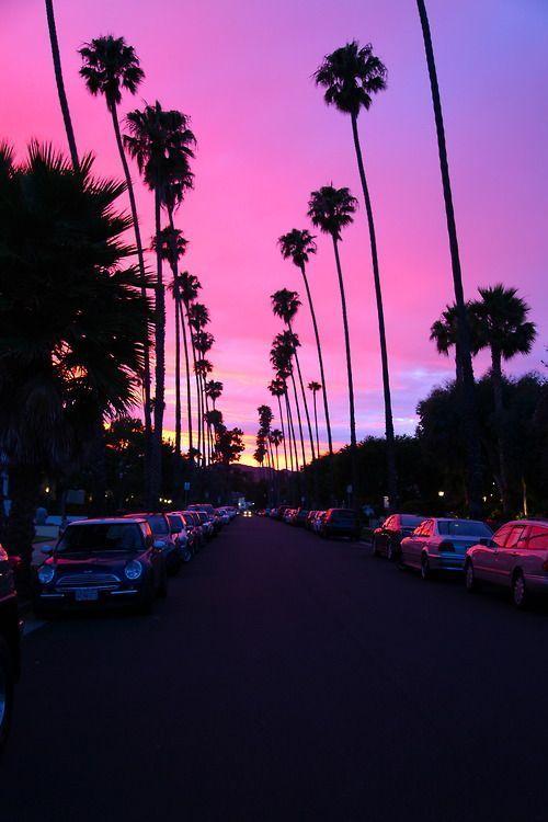 santa monica sunsets.
