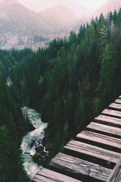 vertigineux voyage découverte paysage forestier de sapins et rivière (travel d...