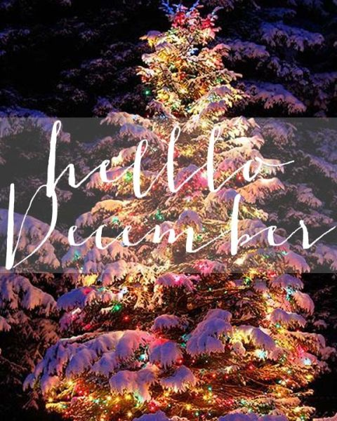 Hello December | Beautiful snow covered, snowy lit up Christmas tree outside out...