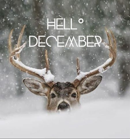 Lux and Lace: Hello December...