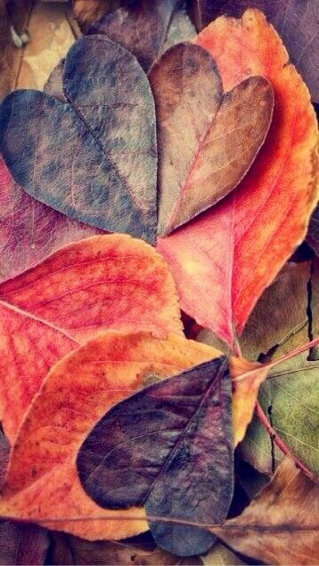 iPhone Wallpaper - Autumn/Fall tjn