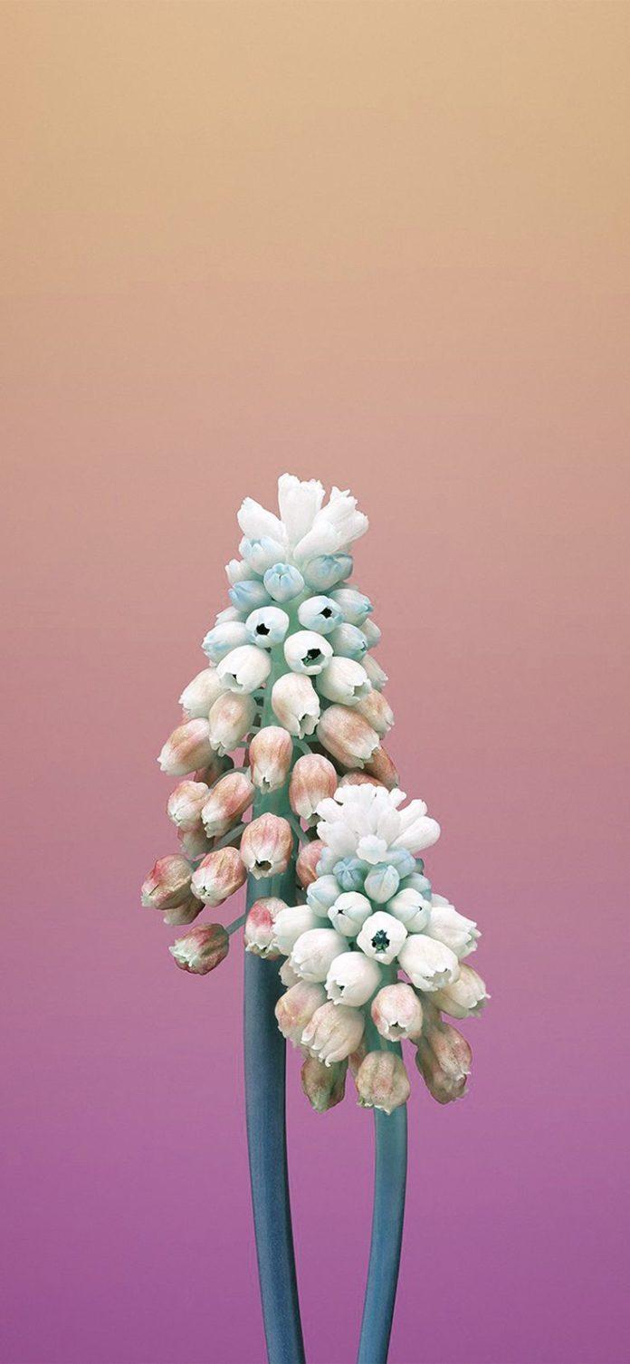 bb81-iphonex-apple-illustration-art-flower-pink via iPhoneXpapers.com - Wallpape...