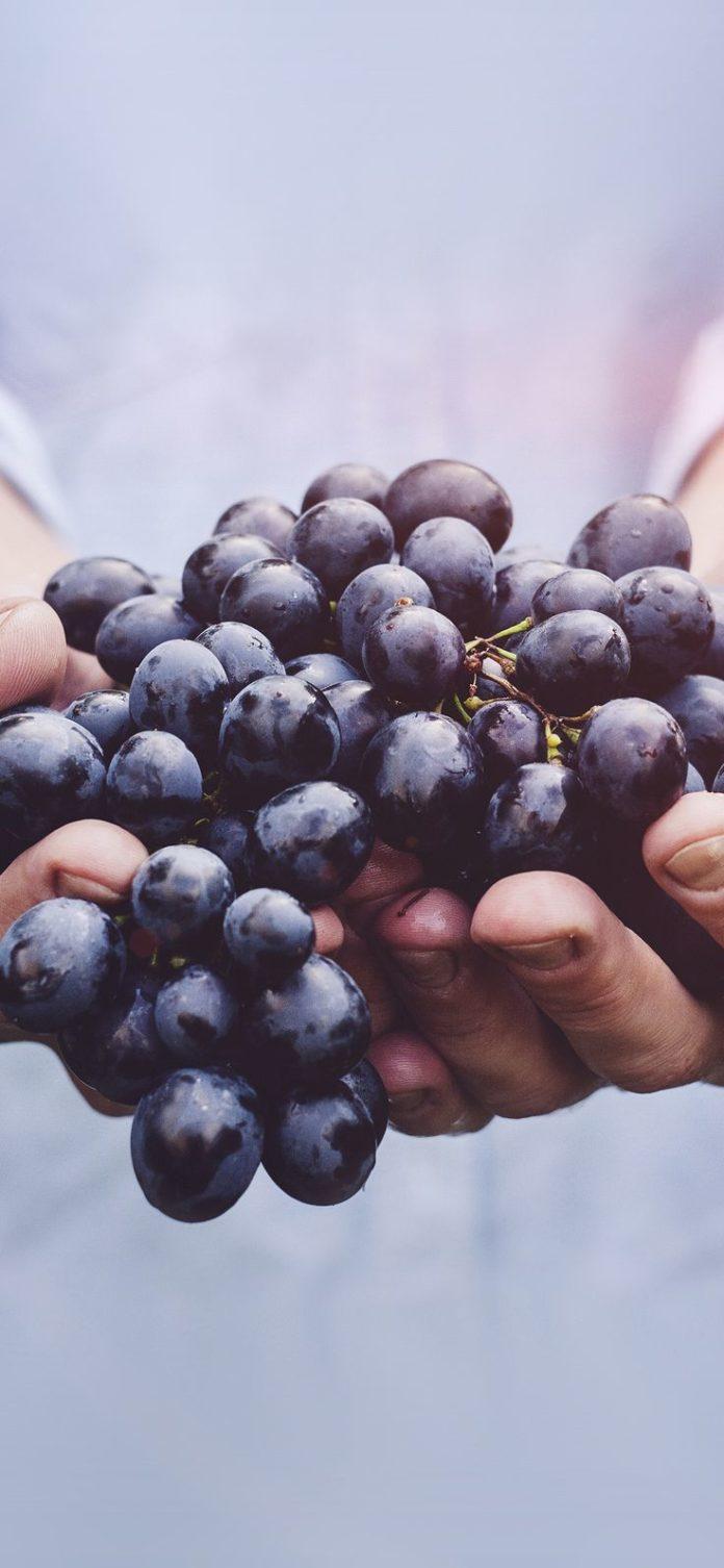 ms42-farmer-food-grapes-fruit-nature-bokeh-flare via iPhoneXpapers.com - Wallpap...