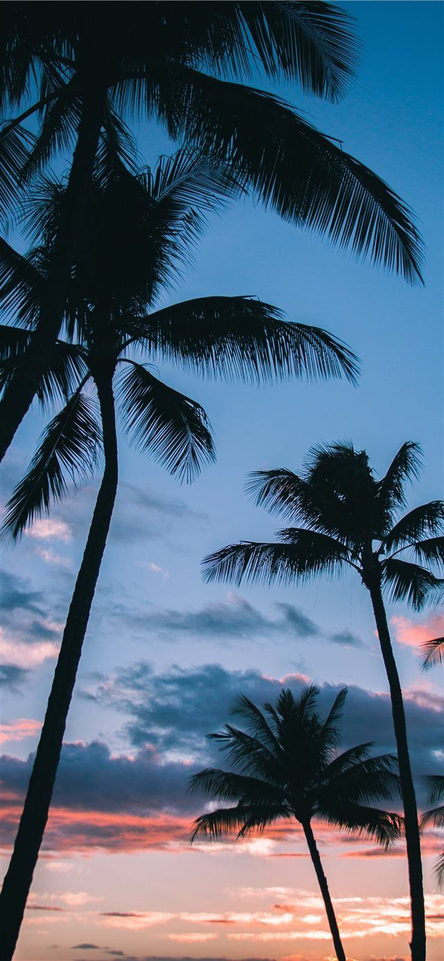 Palm Trees in Paradise iPhone X wallpaper