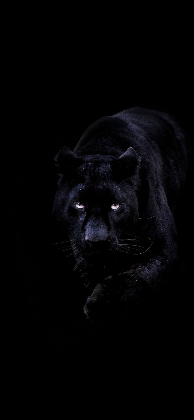 Iphone X Wallpaper Bd93 Animal Dark Black Pahter Art