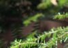nv26-tree-bokeh-plant-wood-nature via iPhoneXpapers.com - Wallpapers for iPhone ...