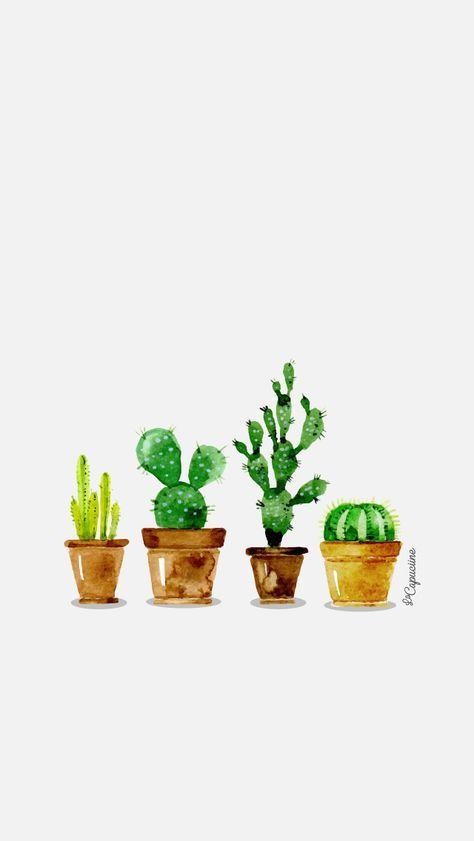 Fond d'écran Cactus La Capuciine                                           ...