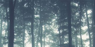 The stunning Sea of Trees wallpaper mural captures the silhouettes of the forest...