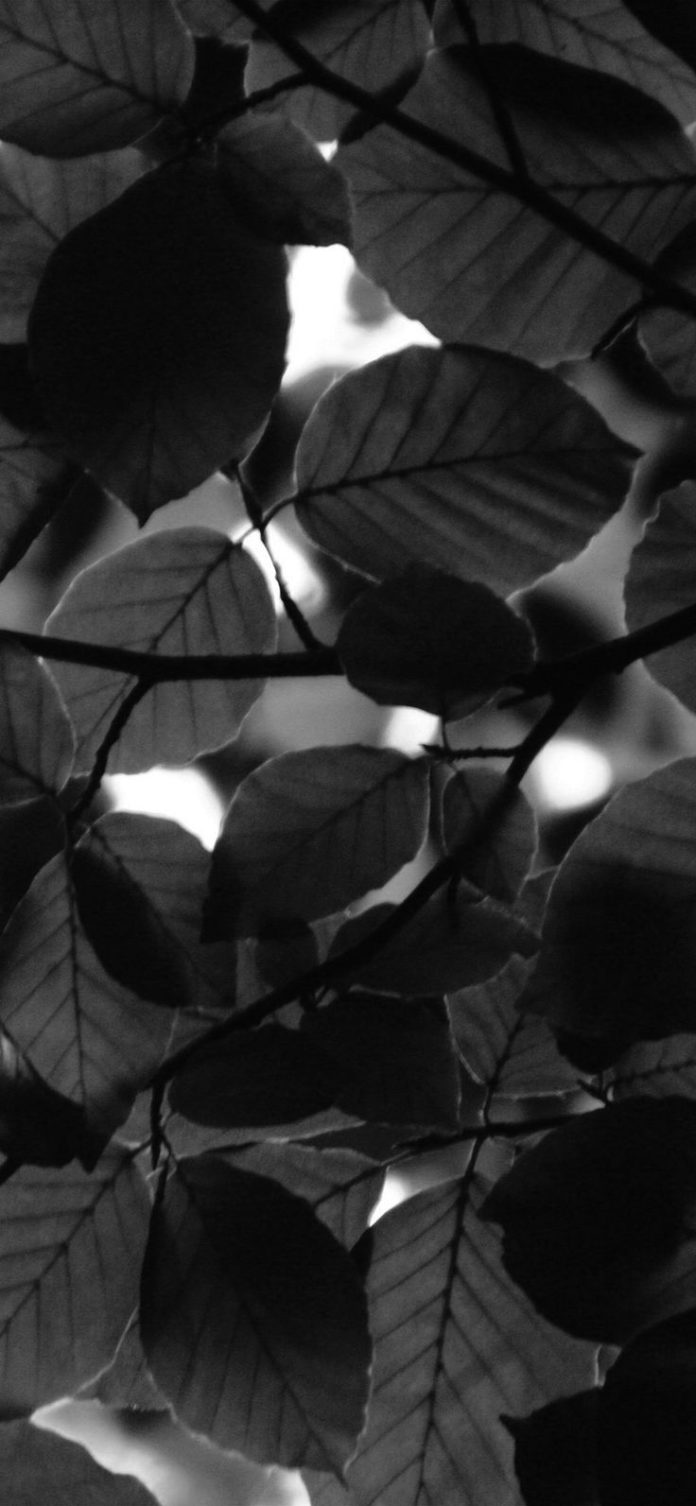 nc24-tree-blossom-nature-leaf-green-dark-bw via iPhoneXpapers.com - Wallpapers f...
