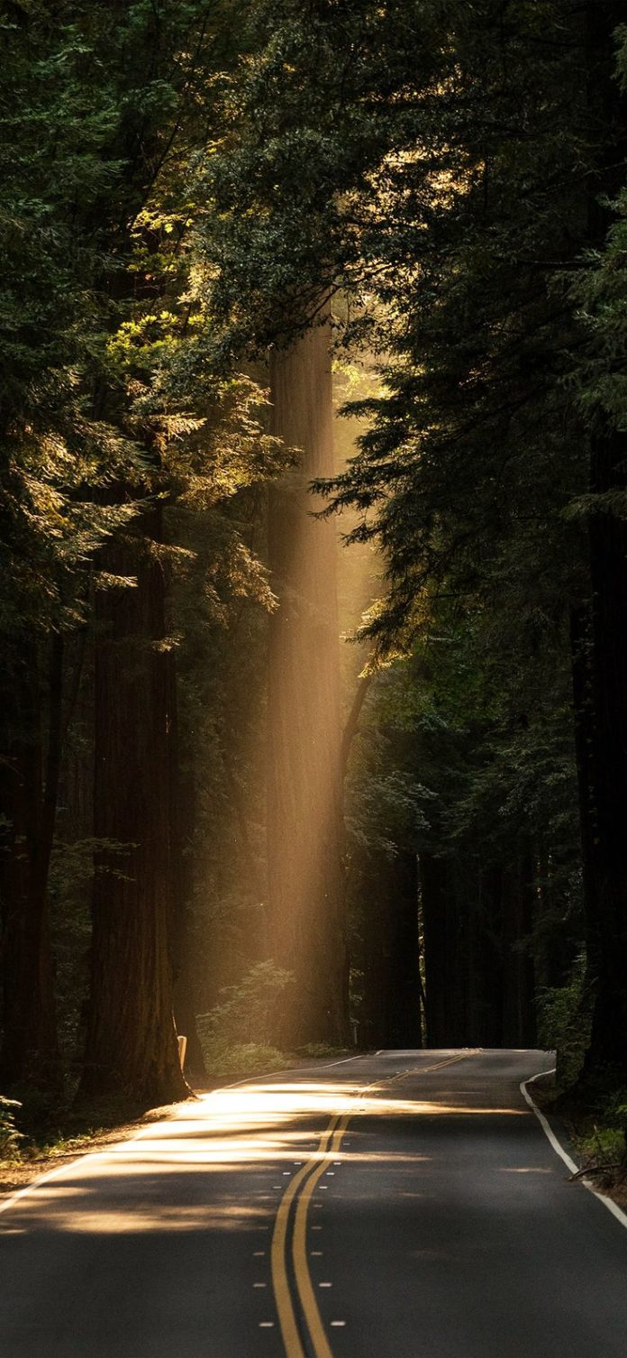 nh17-light-road-wood-forest-way-nature-green via iPhoneXpapers.com - Wallpapers ...