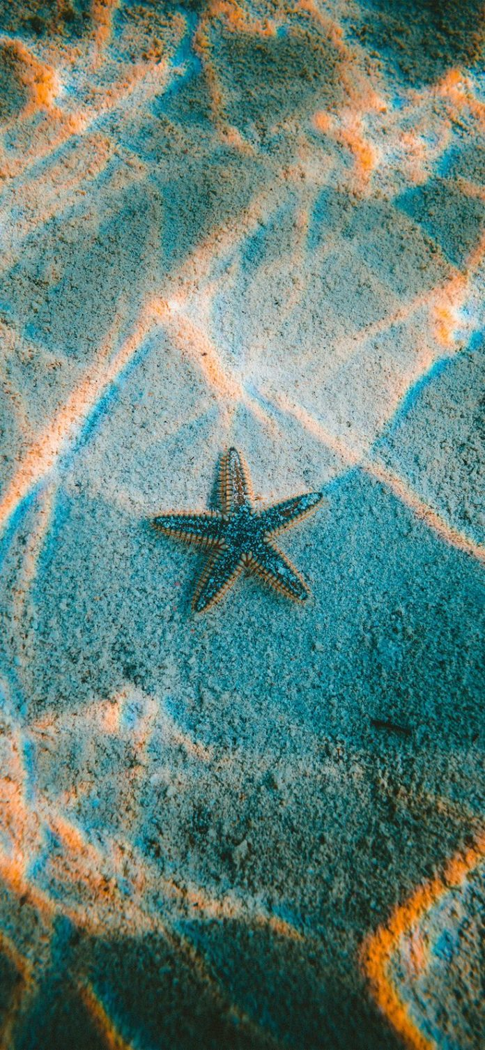 nu23-starfish-sea-beach-nature via iPhoneXpapers.com - Wallpapers for iPhone X