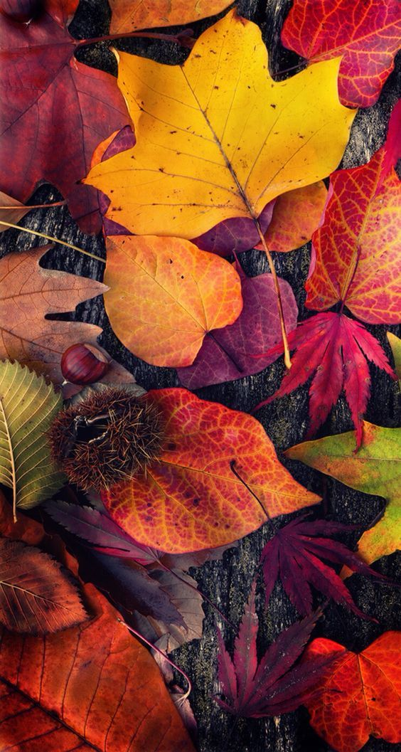 Fall iPhone Wallpapers - 30 Cute Fall iPhone Background Ideas for FREE Download